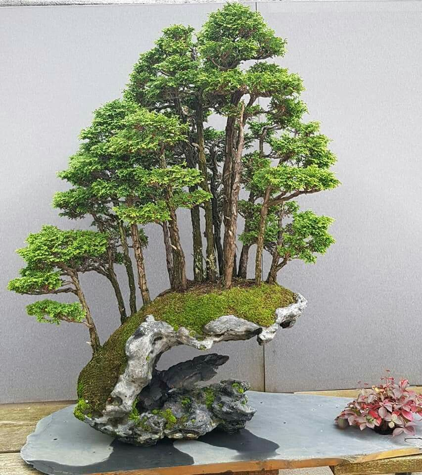 Bonsai I Wonder If I Could Build A Fake Version Of This It S So