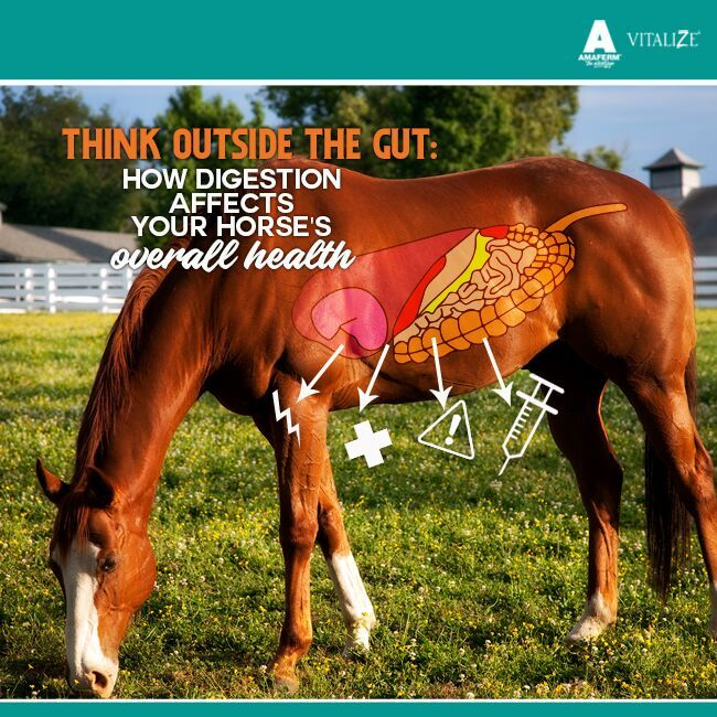 Think Outside the Gut How Digestion Affects Your Horse's