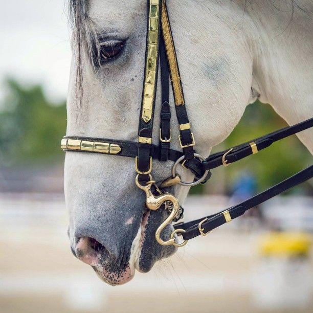 I've always liked those curvy bits. #Lipizzan #TempleLipizzan #Lipizzaner #doublebridle #DressageatDevon #stallion #dressage #beautifulanimals #bestofequines #equestrianstyle #equine #equestrian #equinephotography #horsesofinstagram #horsetagram #ig_horses