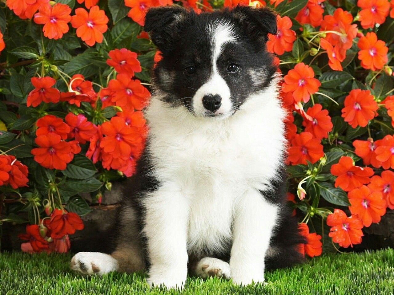 Pin by m tiebosch on honden pinterest