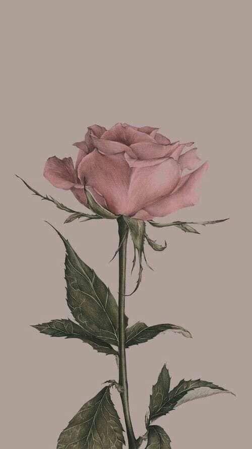 Best Of Vintage Flower Wallpaper Designs And View In 2020 Vintage Flowers Wallpaper Vintage Floral Wallpapers Vintage Floral Backgrounds