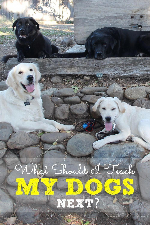 Composed Best Dog Training Tricks Say Hi Dog Training Classes