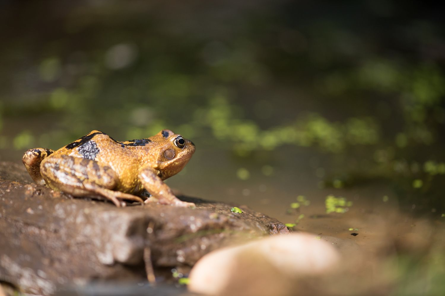 Encourage Frogs And Toads Into Your Garden Build A