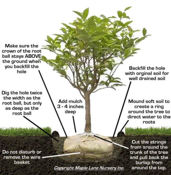 Pin On Tree Planting