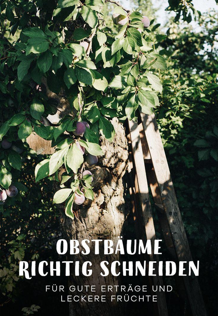 Alten Obstbaum Richtig Schneiden Gartenblog Hauptstadtgarten Obstbaume Pflanzen Garten Permakultur