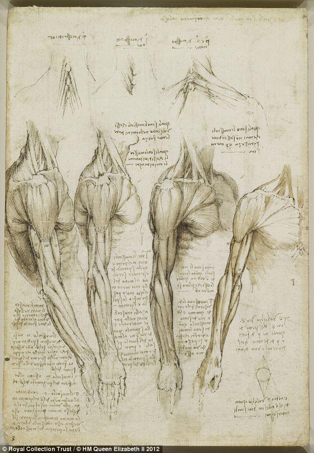 Leonardo da Vinci\'s anatomical sketches. | Sketches, Anatomy and ...