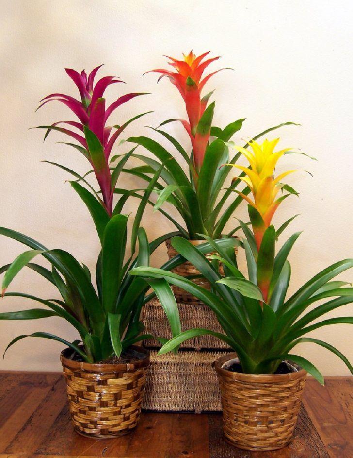 Bromeliads Monocot Flowering Plants Are Long Lasting 640 x 480