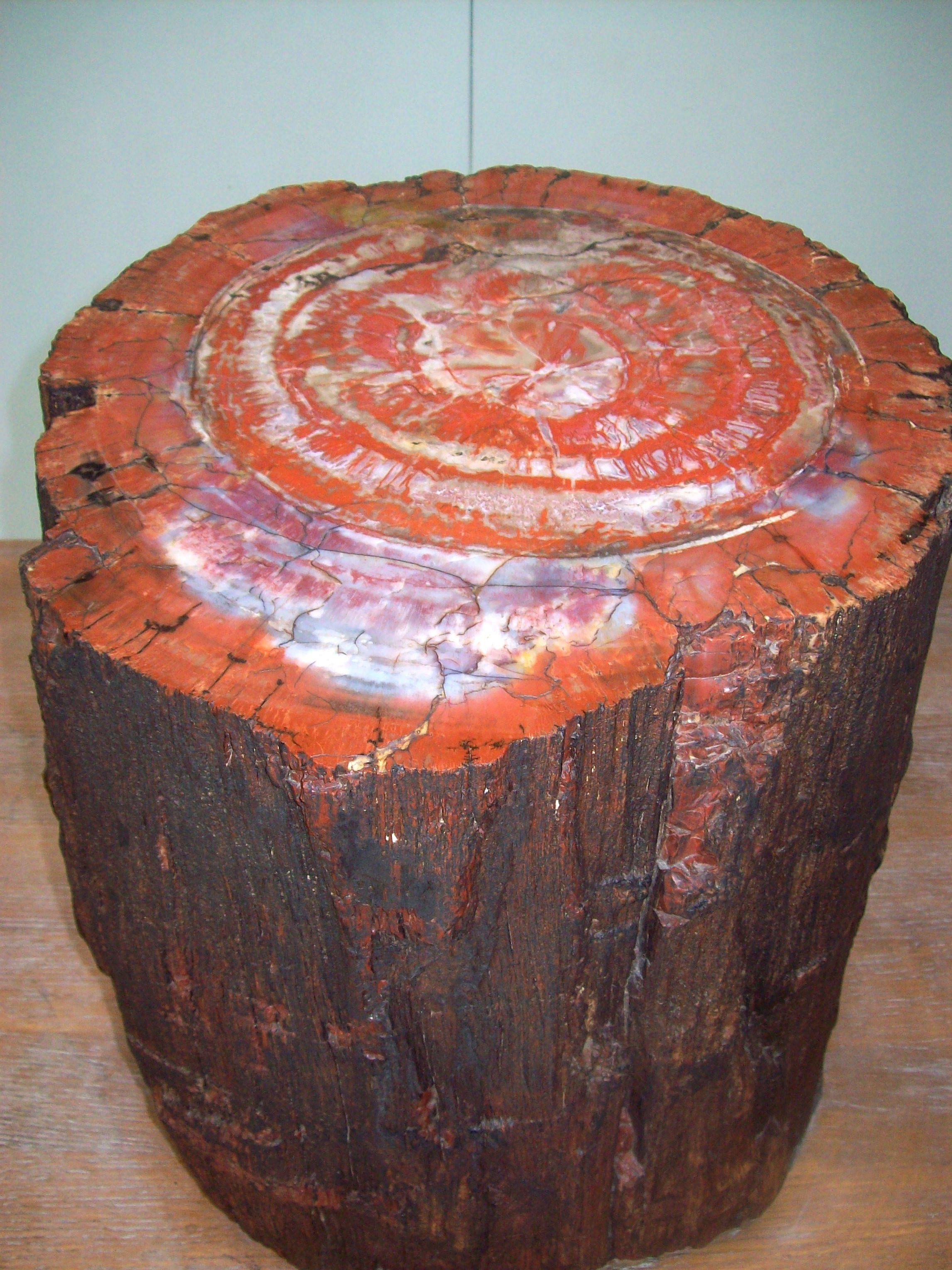 Opalized Petrified Wood