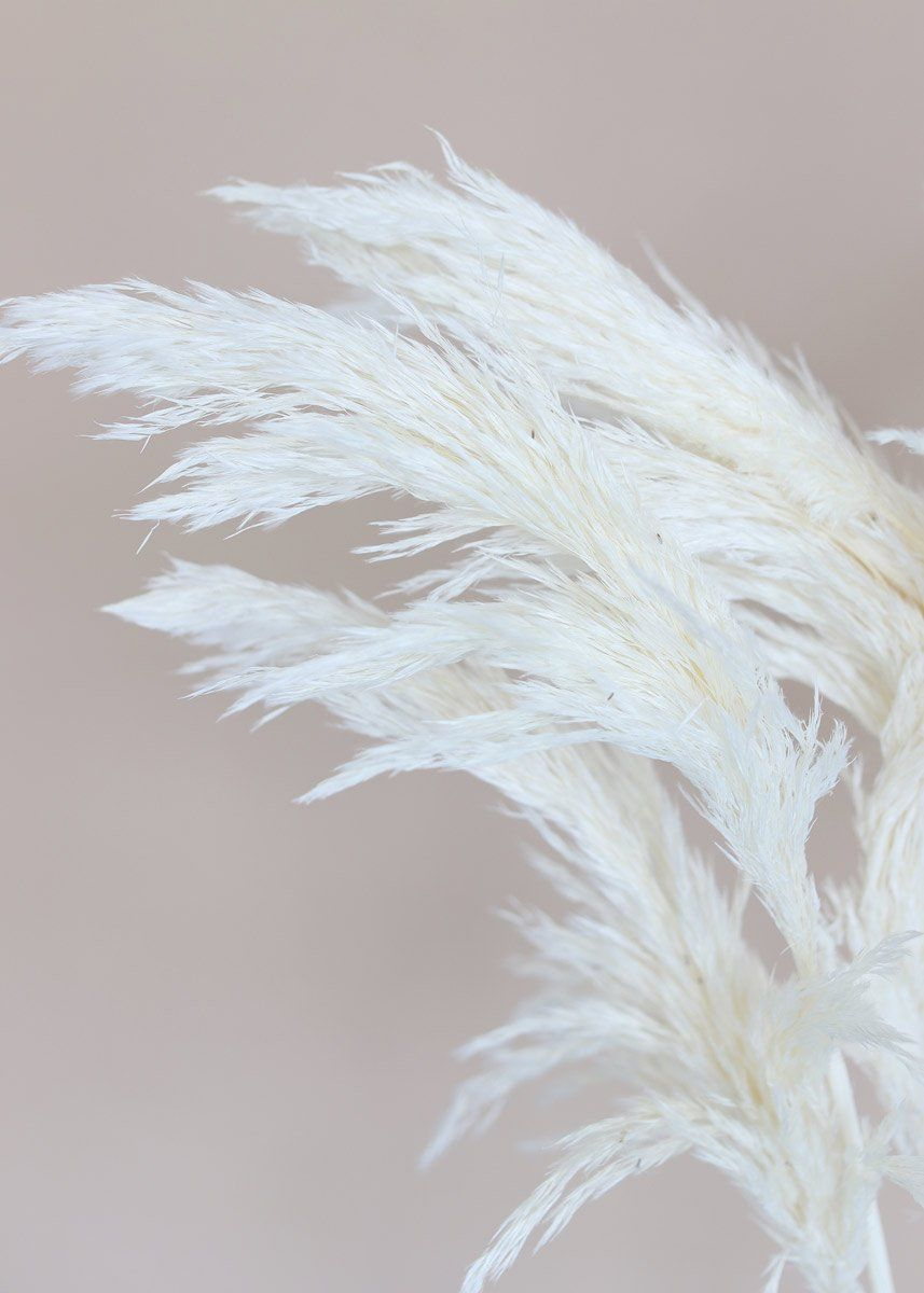 Looking for the perfect dried grass accent for your rustic home decor? Simply drop this tall bleached white plume grass in a vase and you're set! Style alone like pampas grass or add a stem or two to DIY dried flower bouquets.   Bleached White  36-40