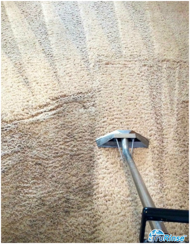 Provides The Best Carpet Protector Service Around How To Clean