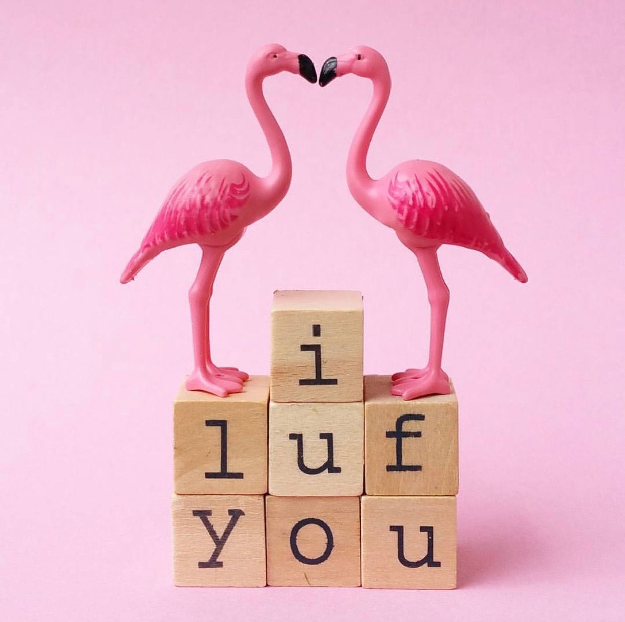Pin By Cecily Bochannek On Pink: Pin By Haelli Retikis-Graser On Flamingo Stuff
