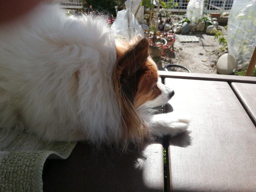 犬が胃腸炎に 元気がない 動物病院で学んだ原因や症状 治療法まとめ 犬 動物 病院