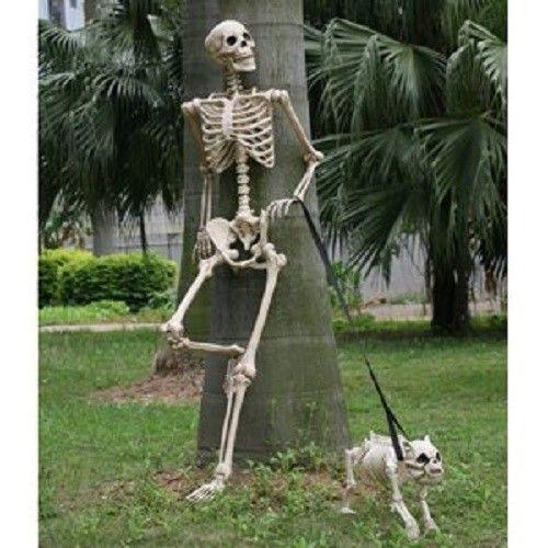 Details about Human Body Skeleton Model 60