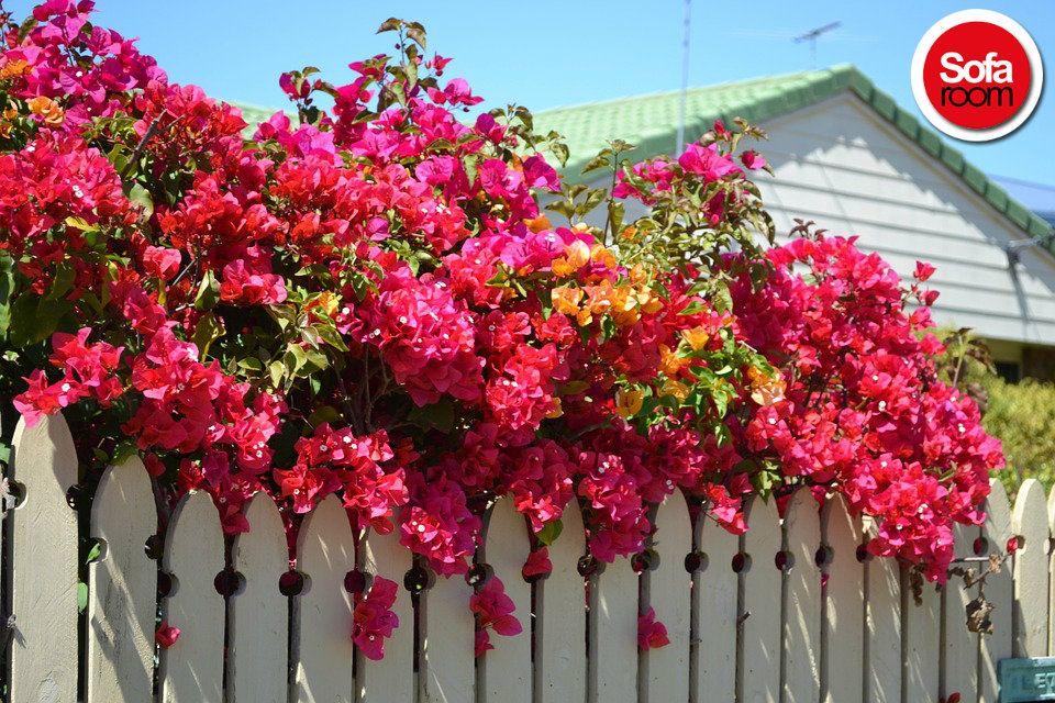 www.sofaroom.com Hayırlı Cumalar... #hayirlicumalar #mutlu #doga #günaydın #sofaroom #yuvarlakyatak #pembeçicek  #cicek #çiçek #pembecicek #pembeçiçek  #lovely #beautiful #beyaz #ev