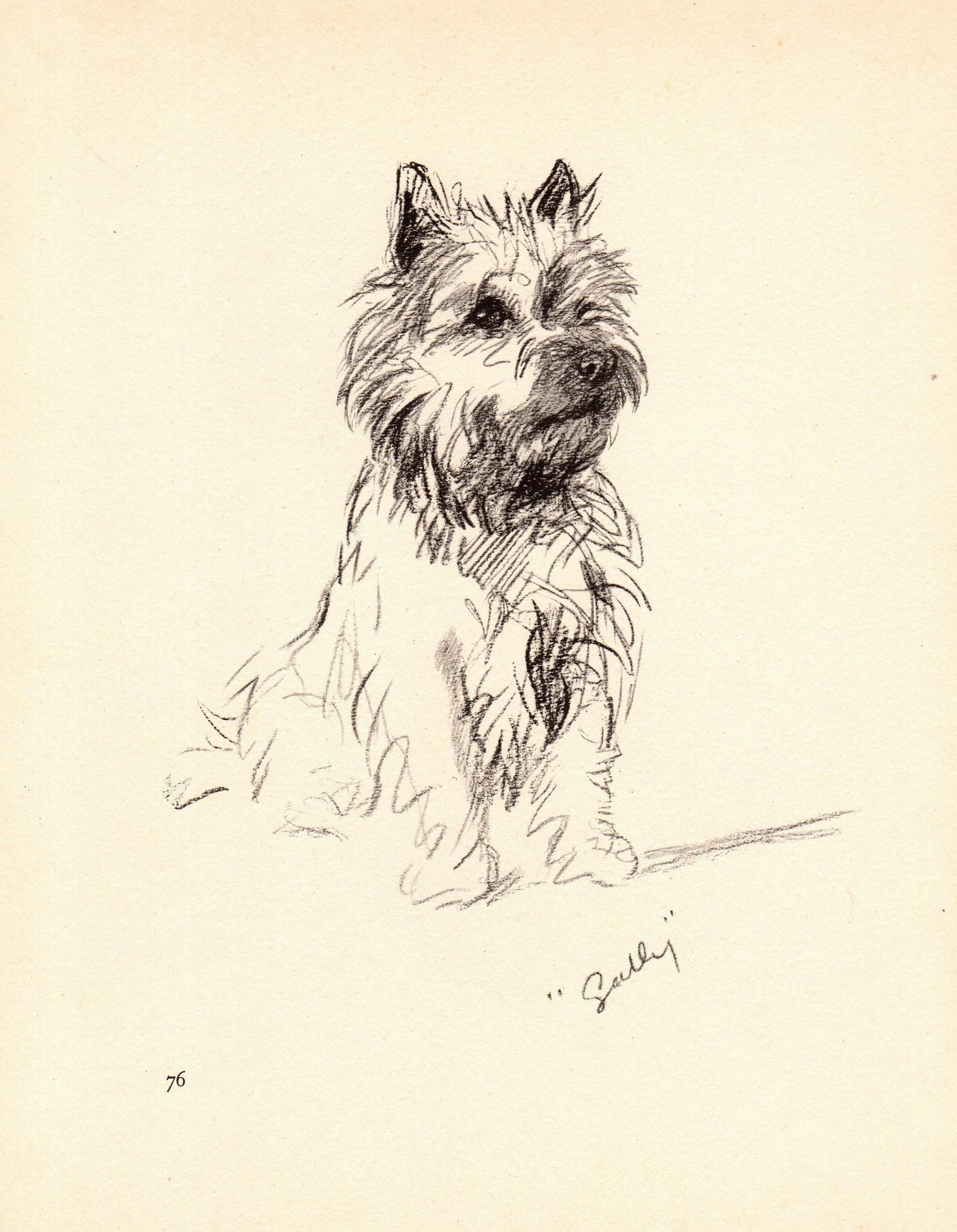 1940 Antique Cairn Terrier Dog Print Vintage Lucy Dawson Cairn Art