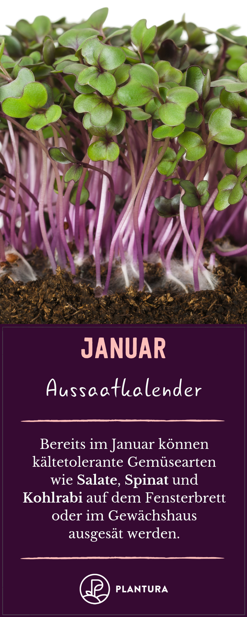 Aussaatkalender: Wann wird was ausgesät? - Plantura
