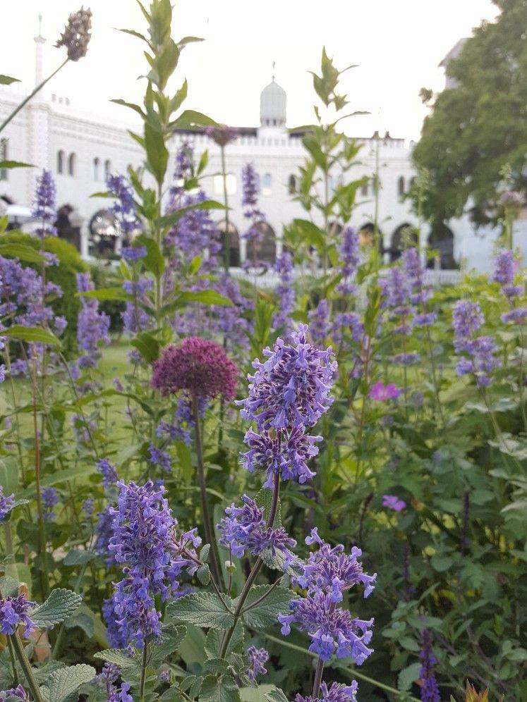 ปักพินโดย Somrudee Ek ใน beautiful flowers garden
