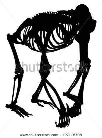 illustration with gorilla skeleton silhouette isolated on white background by Potapov Alexander, via Shutterstock