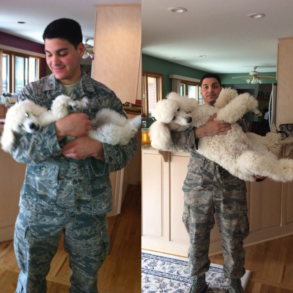 60 Before And After Photos of Dogs Growing Up With Owners