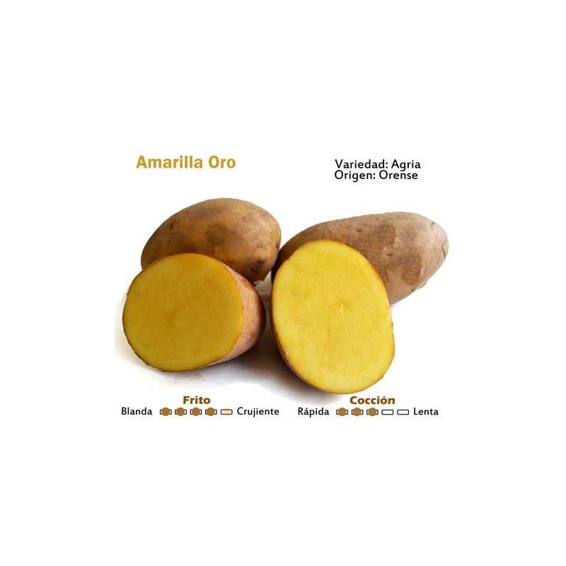 Patata Oro Amarilla Patatas Coccion Oro