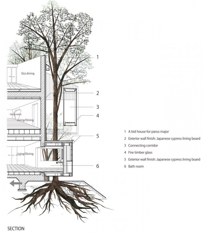 Architecture Drawing Trees dancing trees, singing birds / hiroshi nakamura & nap | bird
