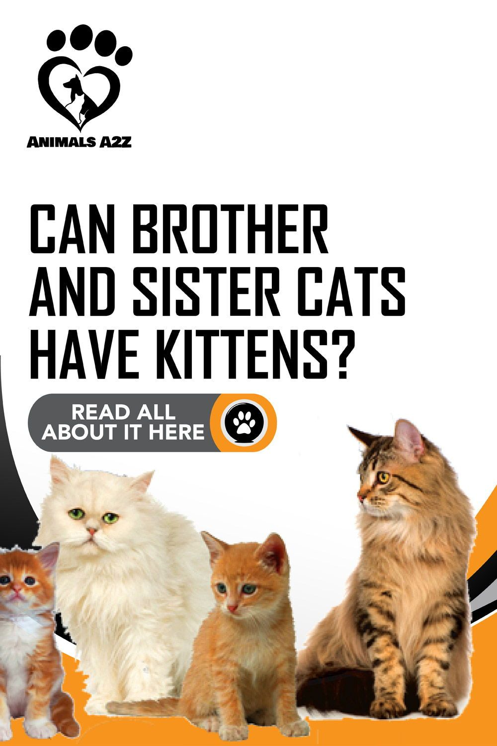 Can Brother And Sister Cats Have Kittens Detailed Answer In 2020 Cat Having Kittens Pregnant Cat Cat Questions