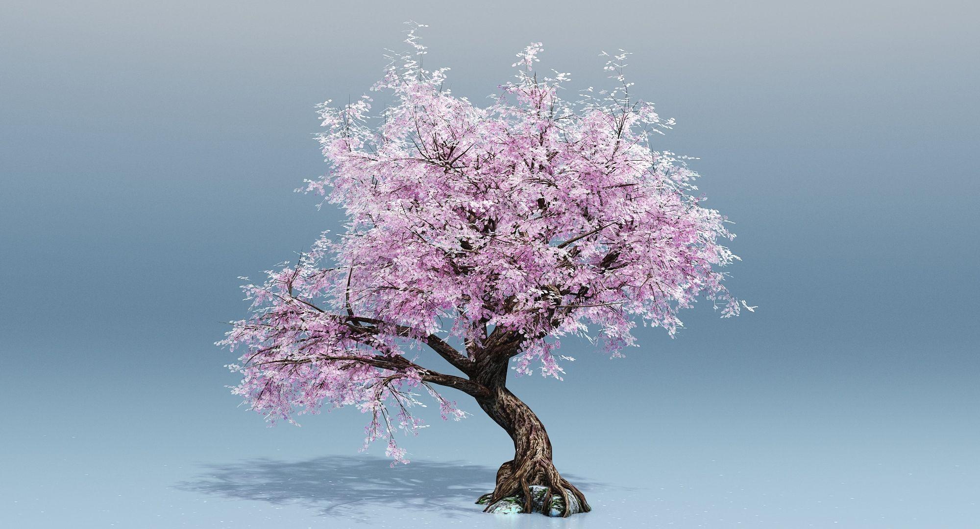 Cherry Blossom Tree 3d Turbosquid 1189864 Cherry Blossom Tree Cherry Blossom Drawing Cherry Blossom Tree Tattoo