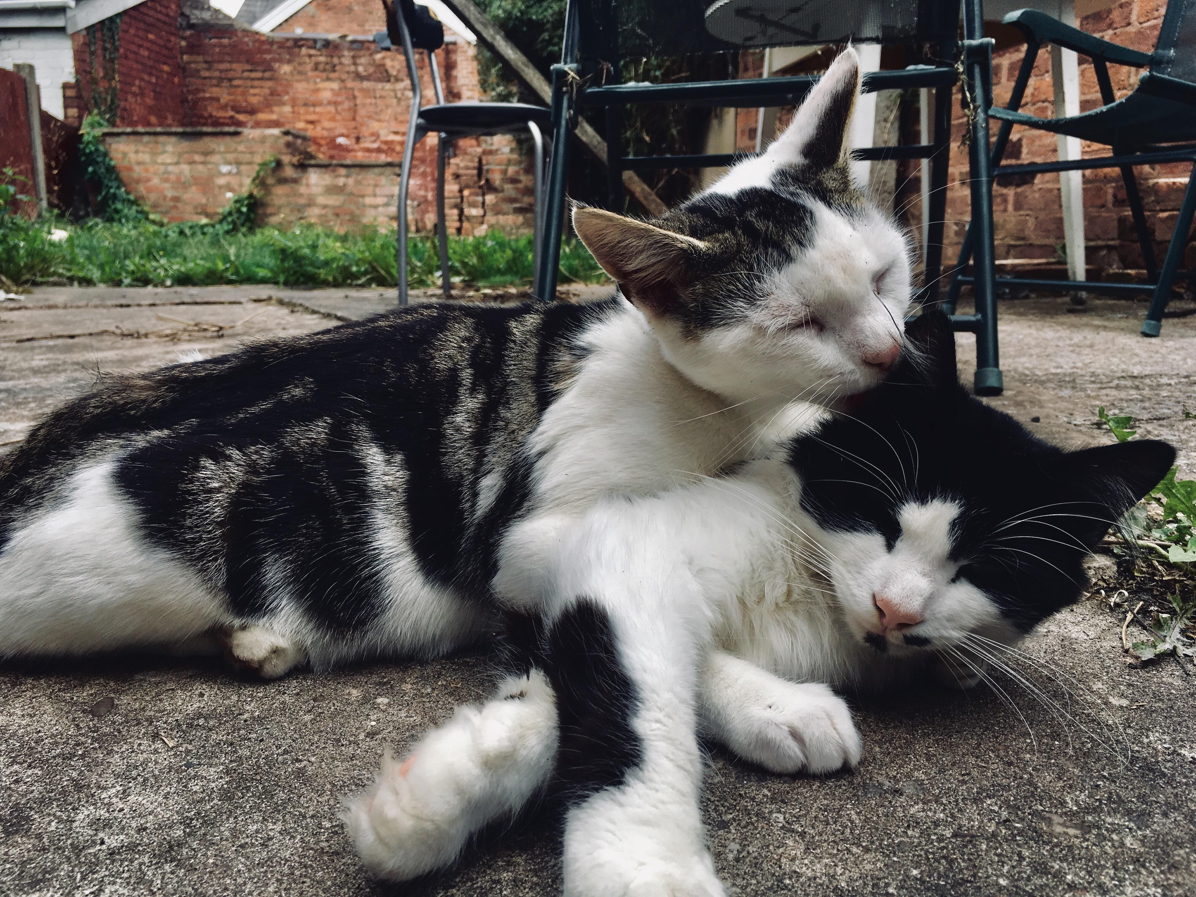 Toby And Catrick Swayze Enjoying A Bonding Moment Cats Kittens Cutest Pretty Cats