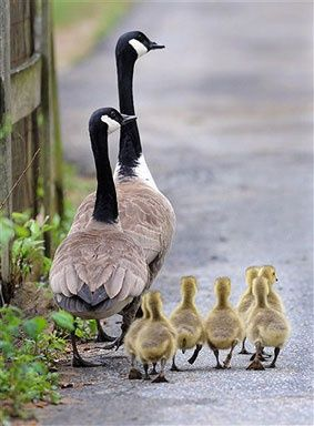 family day out