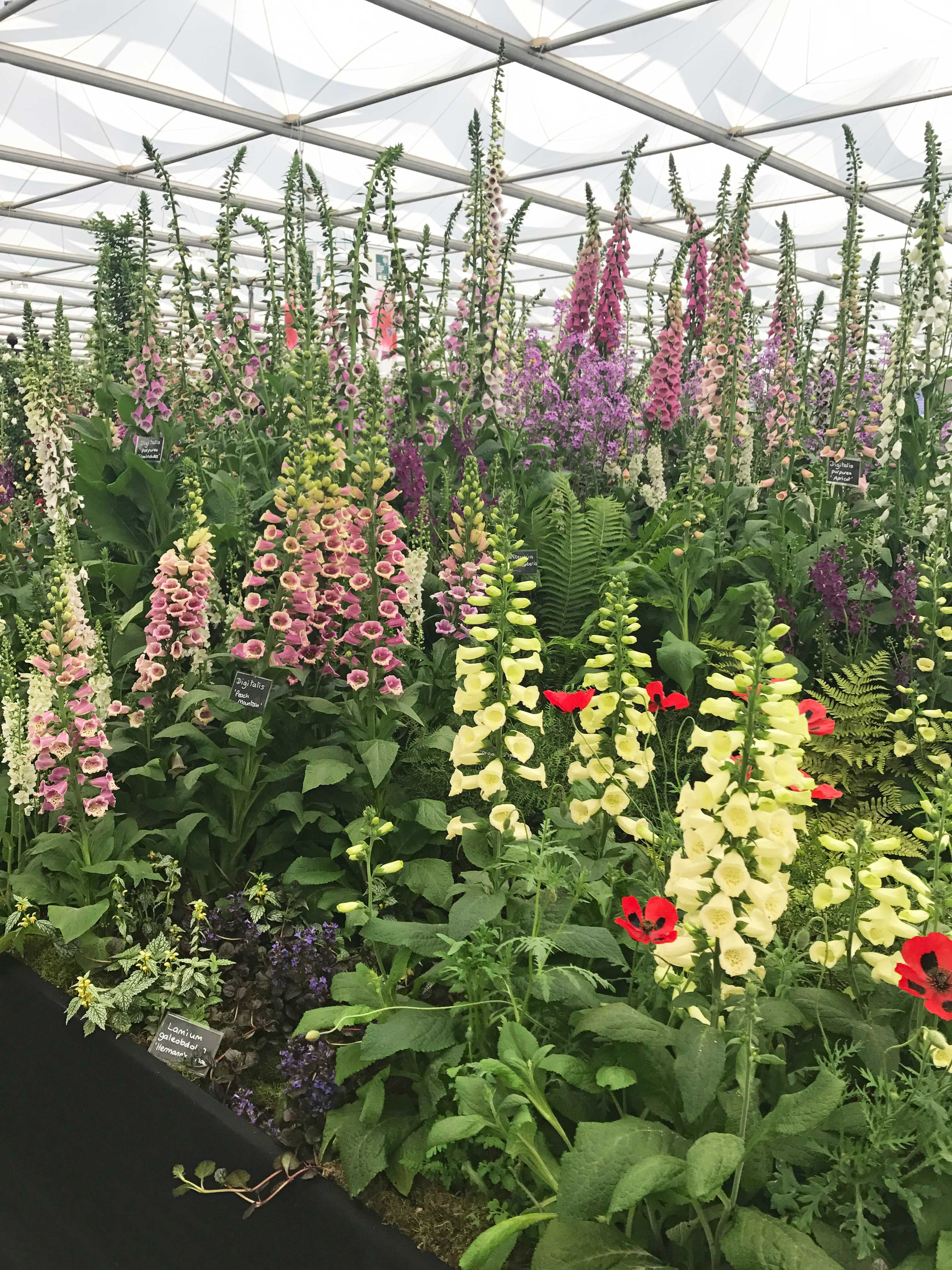 Chelsea Flower Show 2019 Highlights The Importance Of Sustainable