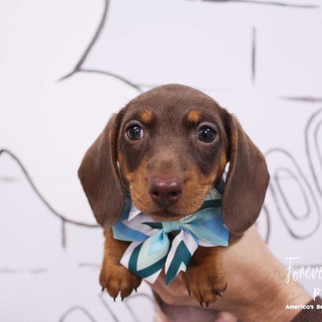 So Fur Ocious 954puppies Com Affordable Financing