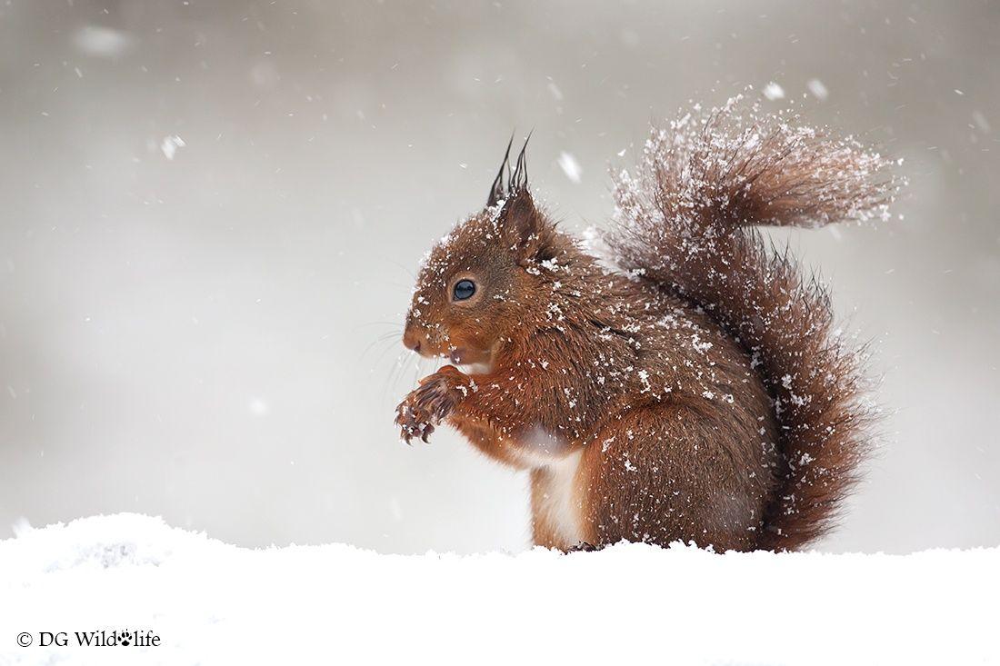 Photo Brrr! by Giedrius Stakauskas on 500px