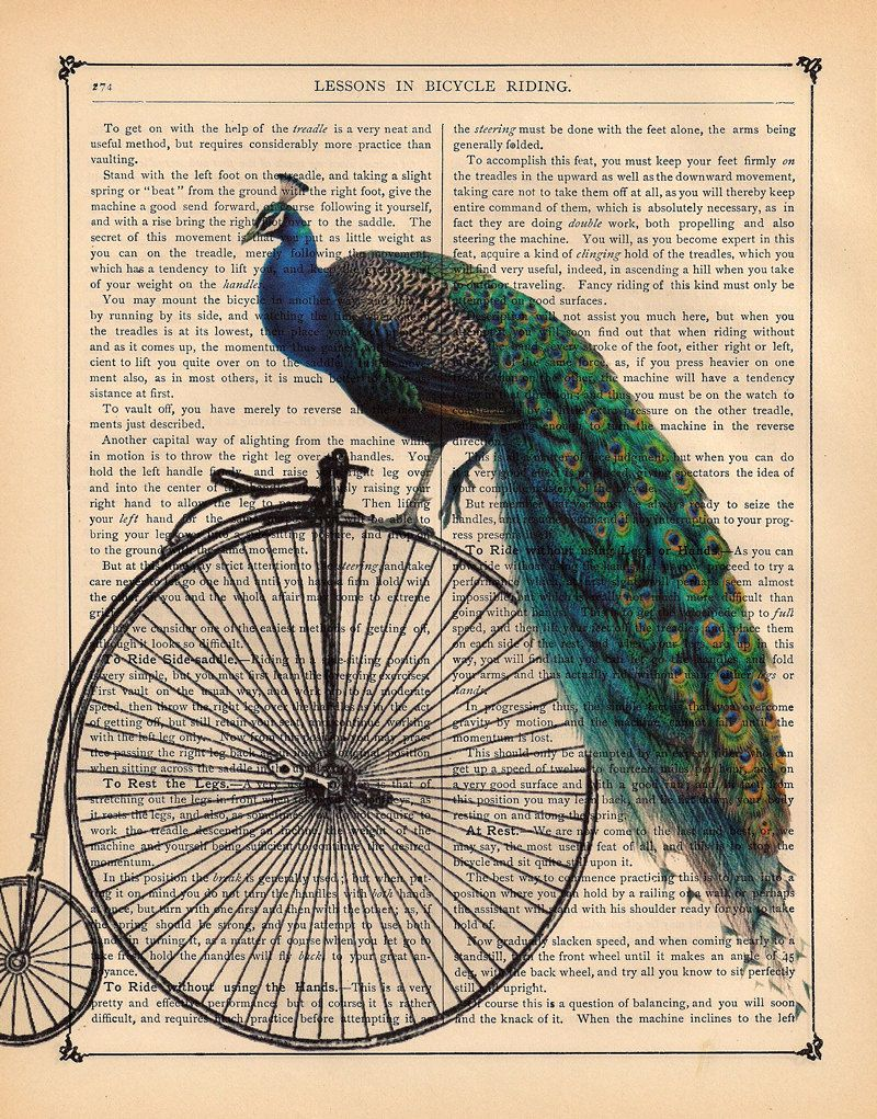 Antique PEACOCK On A Vintage PENNY FARTHING Bicycle Bike Illustration Beautifully Upcycled Dictionary Page Book Art