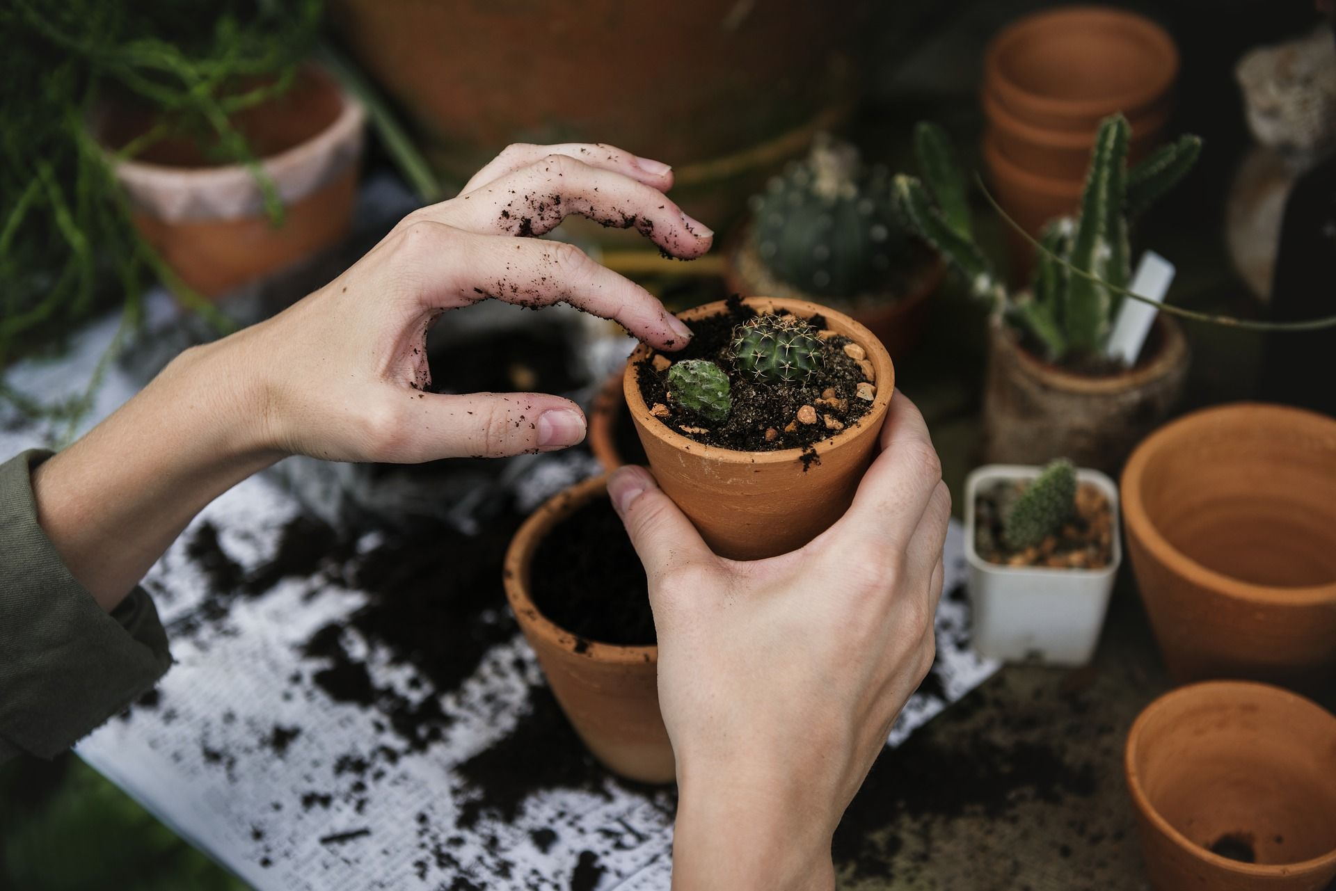 Person potting some plants