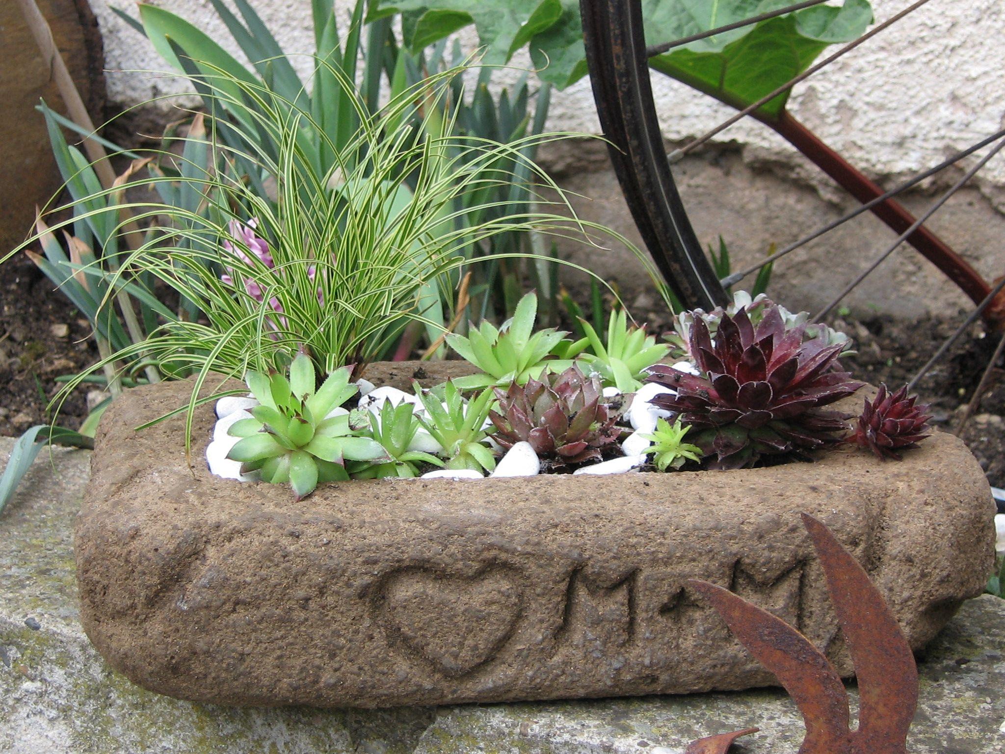 tr gle pflanzschale aus beton hypertufa garten pinterest pflanzen garten und gartenweg. Black Bedroom Furniture Sets. Home Design Ideas
