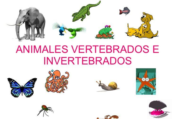 Invertebrados Bing Images Vertebrados E Invertebrados Animales Vertebrados Vertebrados