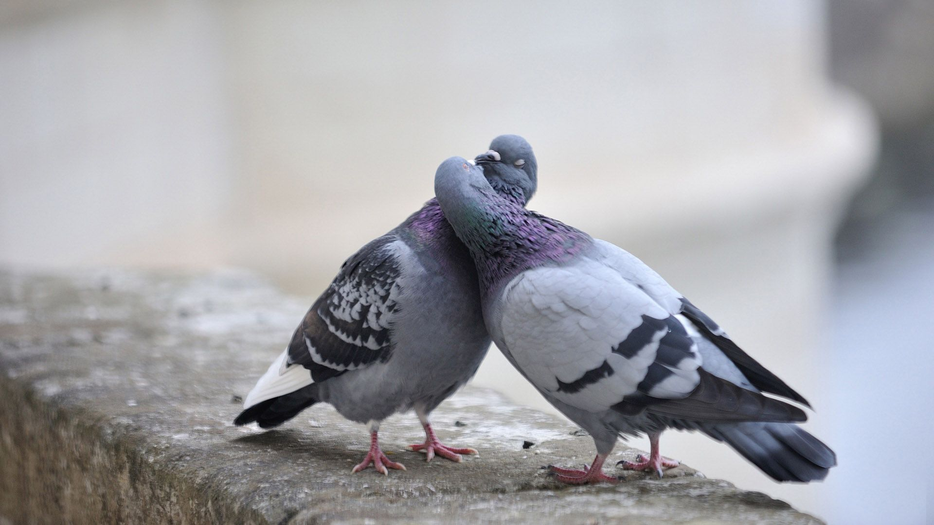 Let Us Always Meet Each Other With Smile For The Smile Is The Beginning Of Love Love Smile Quote Sms Beautiful Birds Cute Pigeon Pigeon