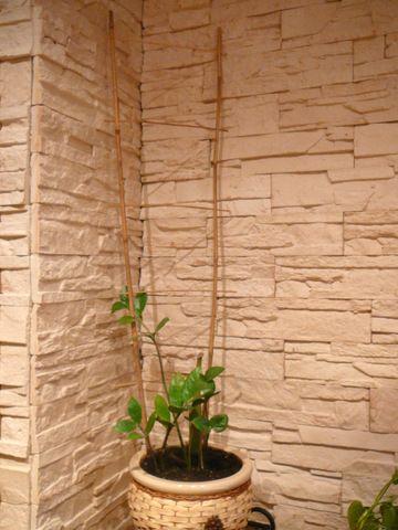 Kamien Dekoracyjny Super Efekt Zobacz Koniecznie Plants