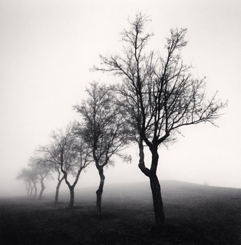 Eight Almond Trees, Casina, Emilia Romagna, Italy, 2008. By Michael Kenna