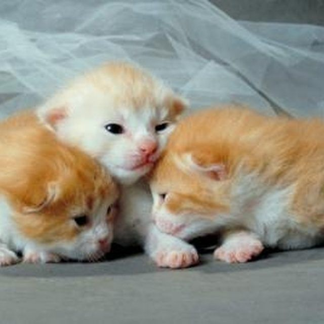 Every Kitten In A Litter Must Be Treated To Eliminate All Fleas Newborn Kittens Cat Fleas Baby Kittens