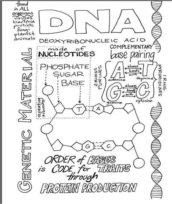 Great DNA handout for Biology and AP Biology Students