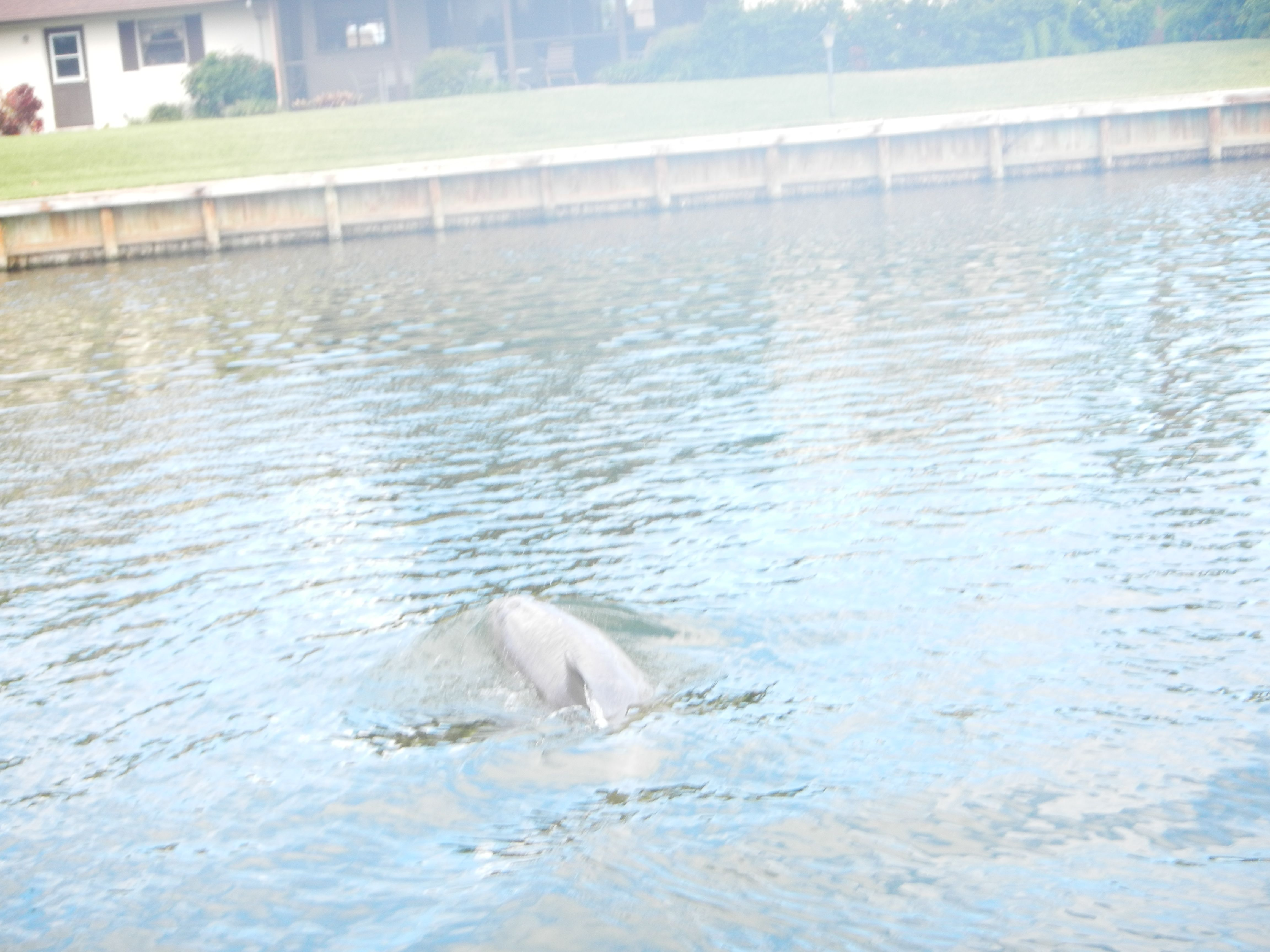 A visit from one of our local Dolphins.  Winter is a great time to see dolphins on our stand up paddle board tours