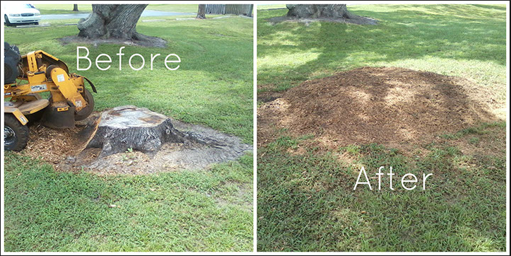 The Best Thing To Remove The Stump Is A Stump Grinder It Removes