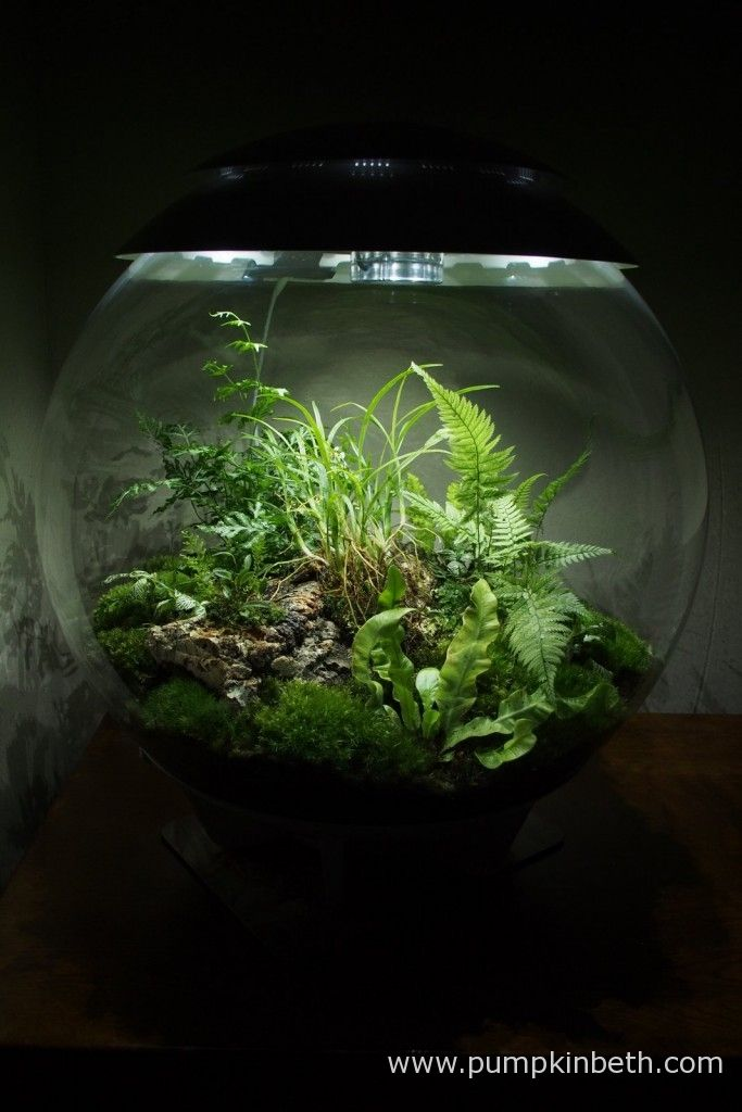 A Long Term Review Of The Biorbair Part Three Aquascape And