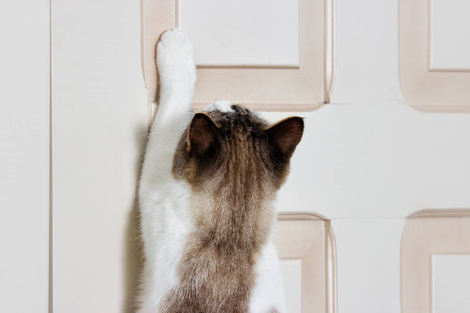 Is Your Cat Scratching Bedroom Door At Night And Ruining Your Sleep In This Article You Will Learn How To Stop This Behavior Cats Cat Scratching Cat Door