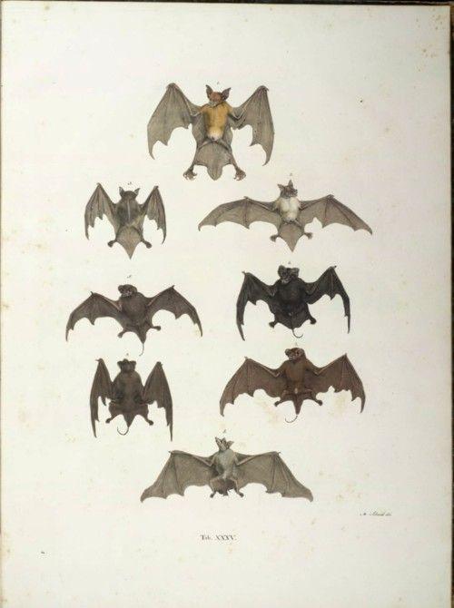 #bats