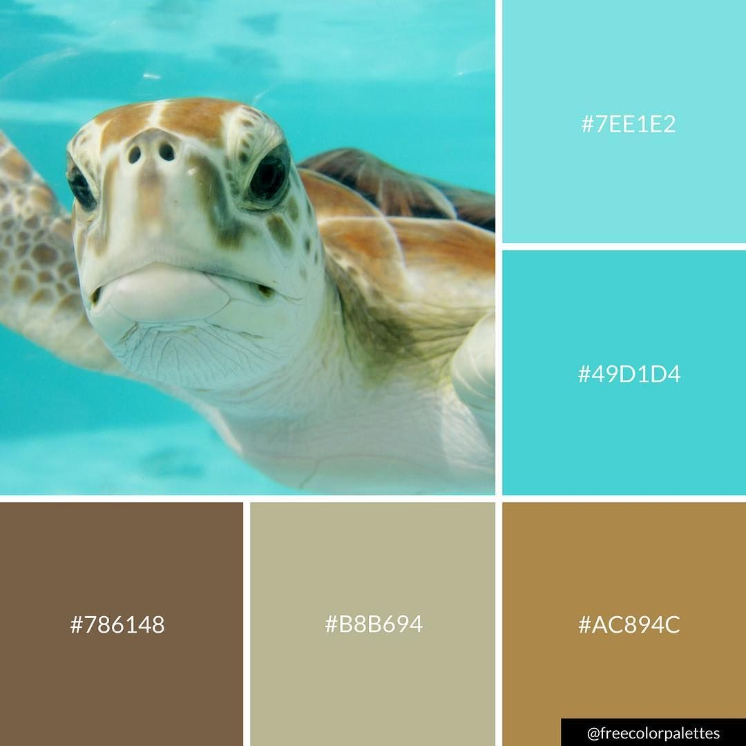 - Cute Underwater Turtle Color Palette Inspiration Great For