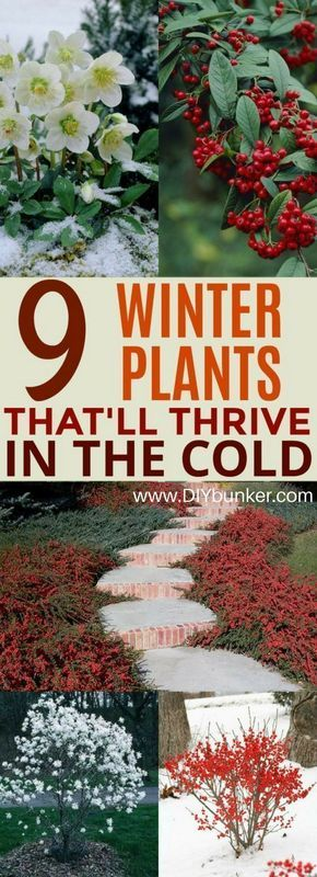 9 Beautiful Winter Plants and Flowers That Survive the Cold #wintergardening