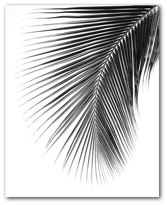 Amazon Com Palm Leaf Print Black And White Tropical Leaf 8 X 10 Inches Unframed Handmade Black And White Painting Black And White Leaves White Painting
