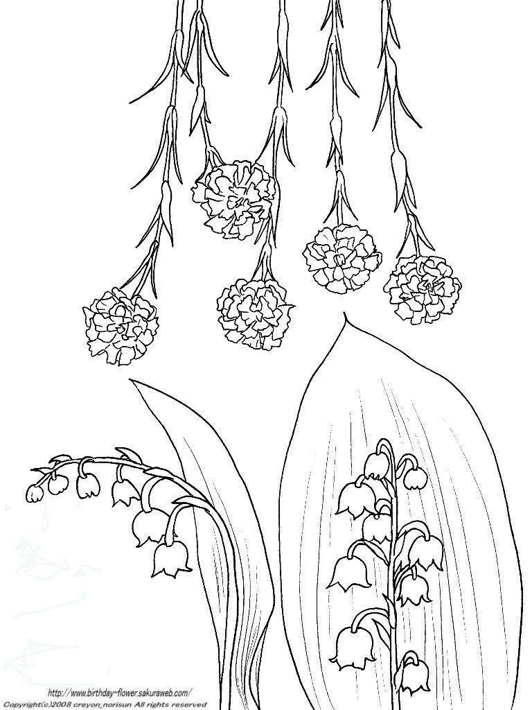 カーネーションすずらんの下絵ー5月の誕生月の花の塗り絵 鈴蘭